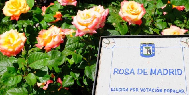 Concurso Popular Rosa de Madrid