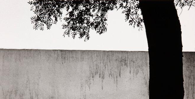 Gómez Martínez, Francisco (Pamplona, 1918 - Madrid, 1998) Título: Tapia y árbol