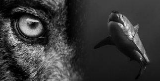 Tiburones y lobos. Presas de nuestro miedo