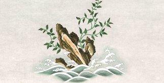 Laminaria japonicaAresch. Acuarela sobre papel de algodón. Real Expedición Filantrópica de la Vacuna (1803-1806). Archivo Real Jardín Botánico-CSIC