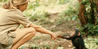 Jane Goodall. Hugo Van Lawick. National Geographic Creative