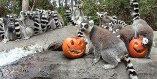 Faunia Halloween 2018